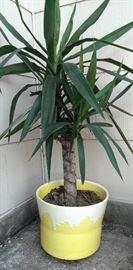 Retro Yellow Pot