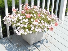 numerous Planters available with this live plant arrangements. Available in two sizes. Petunias and geraniums.