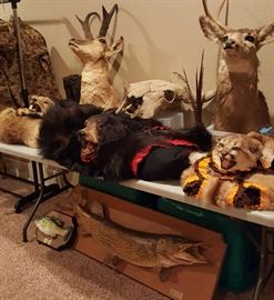 Deer Mounts, Fish Mount, Bear Skin Rug, Bobcat Rug, and Coyote Rug.