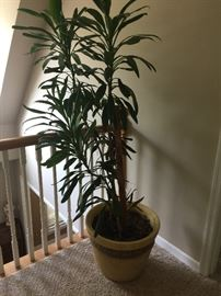 Live potted plant