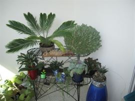 Variety live plants