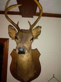 Vintage Deer Bust