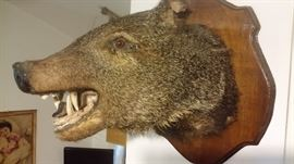 LARGE WILD BOAR HEAD