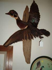 Wood ducks.  nice mounts