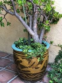 Beautiful plant in large vintage pot