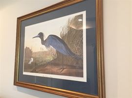 Havell framed Audubon print
