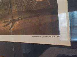 Havell Audubon print