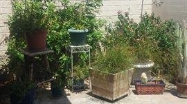 Plants & planters:, (3) Firecracker plants, greens, Fern, etc