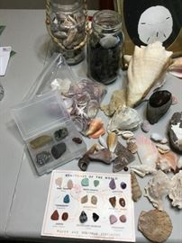 Natural History ft. Seashell Assortment  http://www.ctonlineauctions.com/detail.asp?id=737658