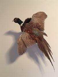 Stuffed Quail / Pheasant