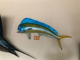 Bull Dolphin
