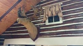 It's a Moose !