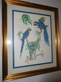 Signed parakeets print
