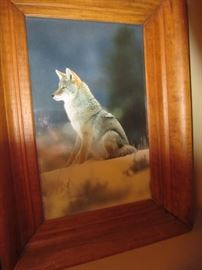 Wolf picture in Pine frame