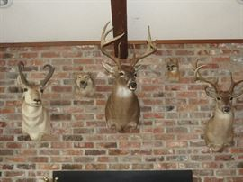 GREAT TROPHY MOUNTS FOR SALE.