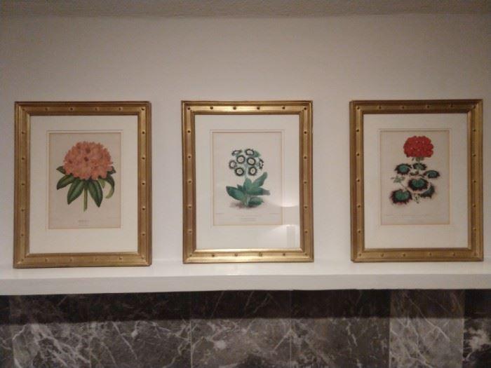 Set/3 nicely matted & framed English botanicals.