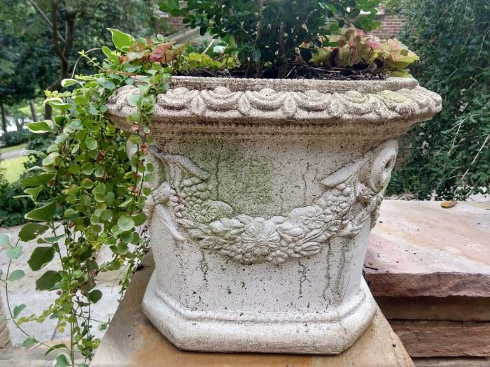 Another happily planted concrete planter. You too can have this lovely number follow you home.                           The price is right!