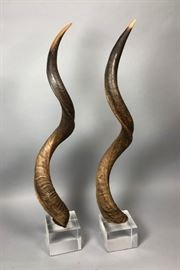 Lot 7 Pr Tall Antelope Horns mounted on Lucite Cube Bas