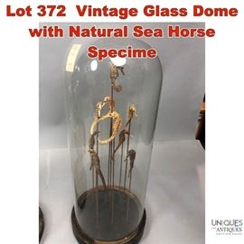 Lot 372 Vintage Glass Dome with Natural Sea Horse Specime