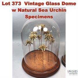 Lot 373 Vintage Glass Dome w Natural Sea Urchin Specimens