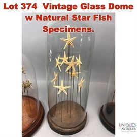 Lot 374 Vintage Glass Dome w Natural Star Fish Specimens.
