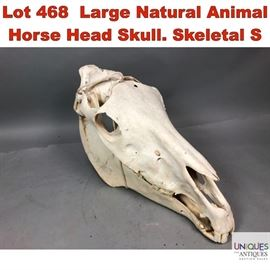 Lot 468 Large Natural Animal Horse Head Skull. Skeletal S