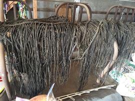 horse fringe