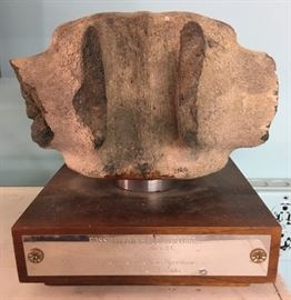 Prehistoric Fossilized Whale Vertebrae