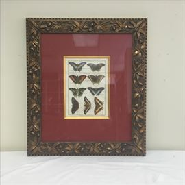 Fabulous 19th century hand painted lithograph of butterflies by Benard Direxit in beautiful frame.