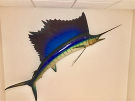 REAL SAILFISH TAXIDERMY