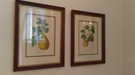 Vintage pear lithographs