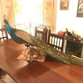 Absolutely Stunning Peacock is Fabulous on this long heavy built plank trestle table/carved legs w/8 chairs app 3' x 8'