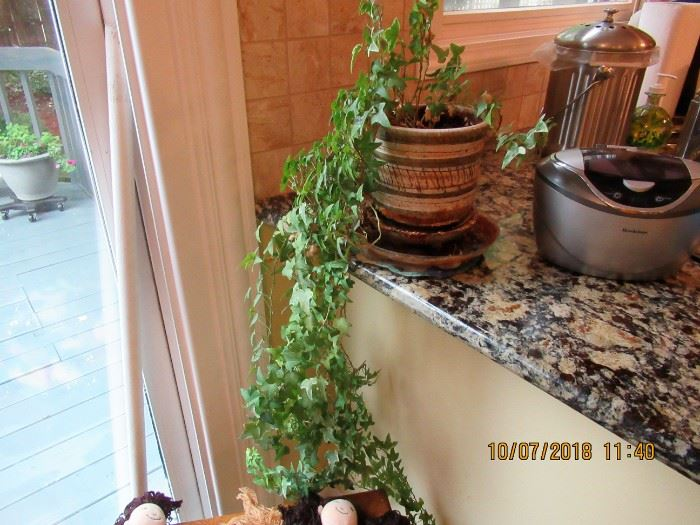 live plants for sale