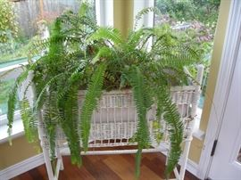 Wicker plant stand with ferns