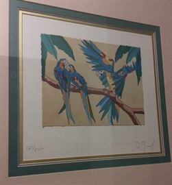 Parrots. Signed and Numbered Print.
