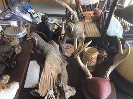 Taxidermied birds
