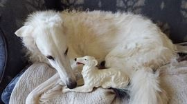 Charlie, a gorgeous Borzoi Hound and this figural lookalike!