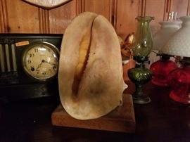 Large Helmet Conch shell made into lamp. 1950's