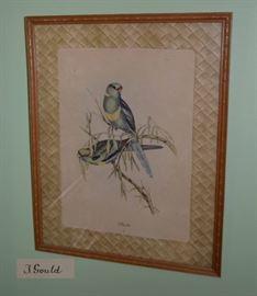 John Gould bird lithograph