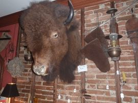 Taxidermy Items,  buffalo Gloves, and Bison Head