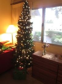 Various Size Christmas Trees
