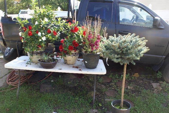 Outdoor & Indoor House Plants