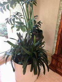 House plants & planters