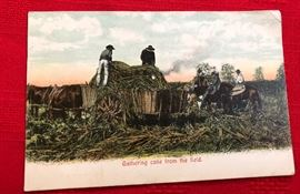 "Post card ""Gathering Cane from the field"""