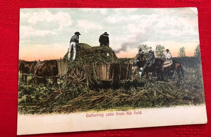 """Post card """"Gathering Cane from the field"""""""