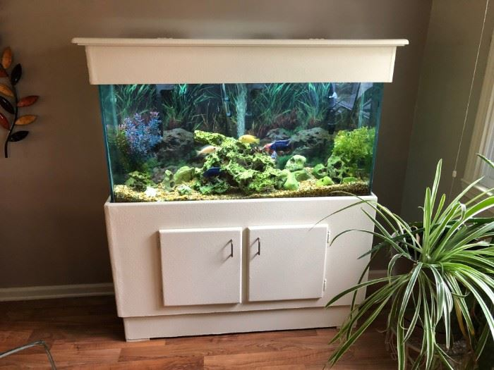 EXOTIC 65 GALLON FISH TANK WITH RARE AFRICAN FISH