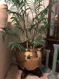 Brass Pot and fern