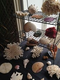 Awesome choices of coral and sea life