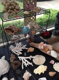 Great  coral and sea life selections