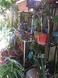 Potted plants galore.